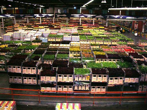 Hollanda Çiçek Borsası
